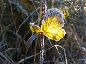 Blatt Winter